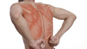 graphic of the muscles in the back