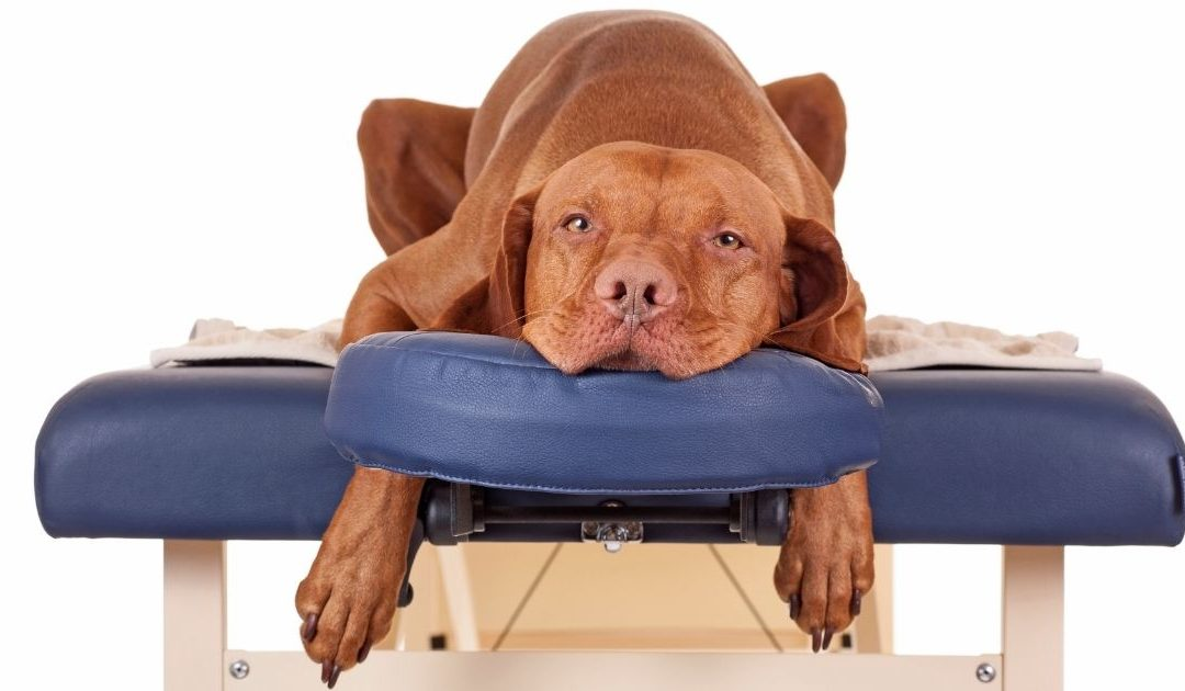Happy International Dog Day: Give Your Dog a Massage!