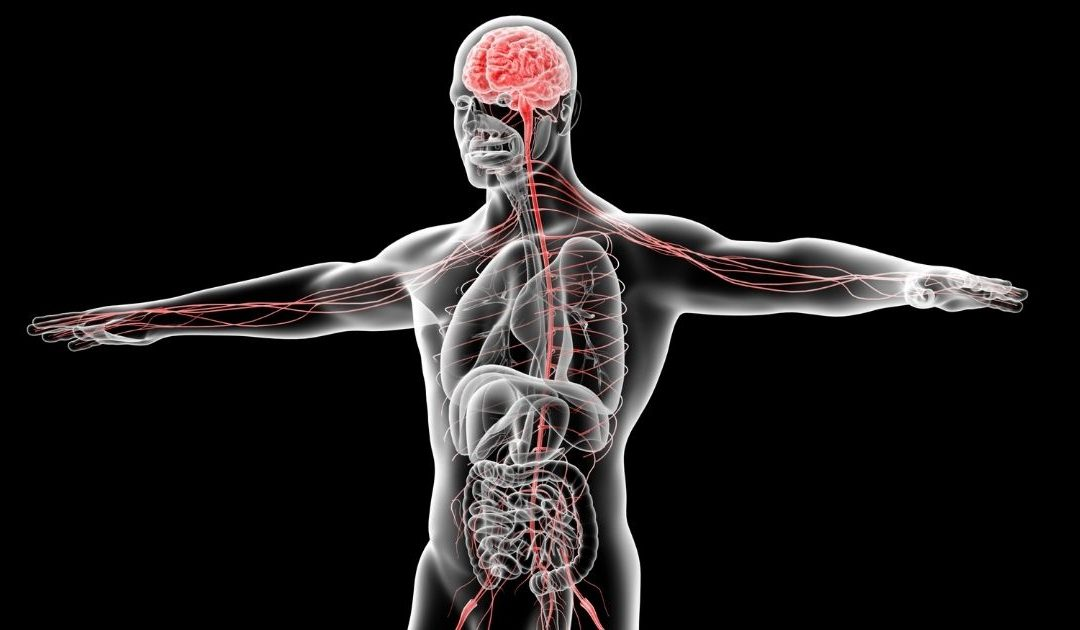 Why Myofascial Release Works
